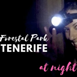 Forestal Park tenerife – at night